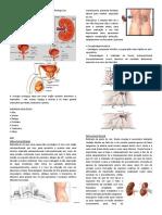 Princípios de Cirurgia Urológica