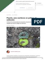 Peyote, Una Cactácea en Peligro de Extinción