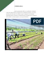 Agricultura empresarial