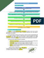 LA ORGANIZACIÓN DEL CUERPO HUMANO.pdf