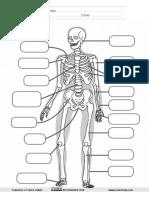 El Esqueleto Ficha