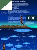 Ejemplo de Sintesis de Lectura - Tenemos Genes de Neandertal.ppt