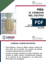 USAID_RED_6_Piña_Cosecha_03_06.ppt