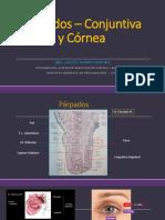 329060094-Ponencia-3-1-Conjuntiva-y-Cornea-Dra.pdf