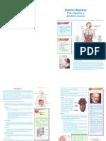 08 Ficha Resumen - Sistema Digestivo PDF
