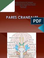 Sara 12 Pares Craneales