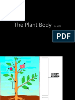Plant and Body Tissue