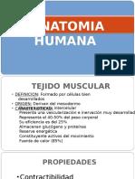 tejido muscular.odp
