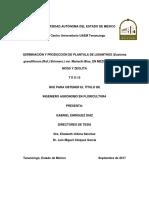 Germinación y Producción de Plantula de Lisianthus-split-merge