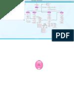 Mapa Conceptual Dirección General