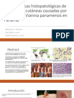 Histopathological Characteristics of Cutaneous Lesions Caused by Leishmania