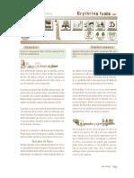 erythrina_fusca (2).pdf