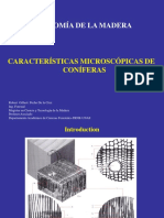 06 Caract. micros. Coniferas-2019-1.pptx