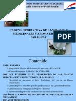 Cadena Productiva de Las Plantas Medicinales y Aromaticas Del Paraguay