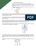 Apoyo Teorico de Las Clases Del Segundo Parcial Sistemas Nervioso, Circulatorio y Respiratorio
