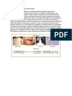 Sem 12 Pregunta 4 inmunologia usmp