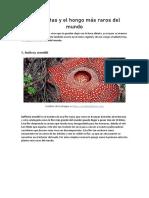 El hongo y las plantas más raros del mundo