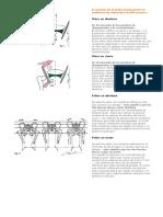 Cadera y cadenas musculares