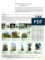 Plantas Endémicas Medicinais de Cabo Verde