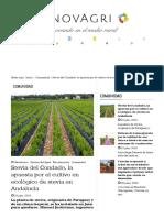 Stevia Del Condado, La Apuesta Por El Cultivo en Ecológico de Stevia en Andalucía _ INNOVAGRI