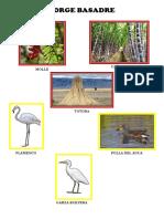 Flora y Fauna de Tacna y Sus Provincias