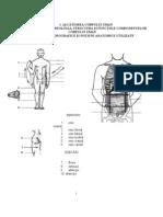Manual Anatomie