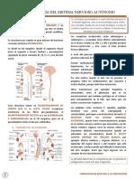 5 Farmacología Del Sna
