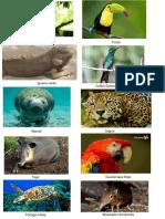 Animales en Peligro de Extincion de Honduras