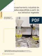 Aprovechamiento industrial de Guadua angustifolia a partir de sus extractos vegetales