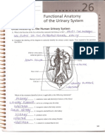 functional anatomy of the urinary system review sheet