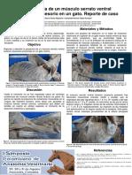 Presencia de Un Músculo Serrato Ventral Torácico Accesorio en Un Gato. Reporte de Caso