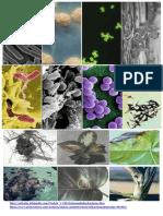 bacterias en plantas, animales y humanos.docx