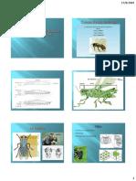 Anatomia y Morfologia de Los Insectos.1