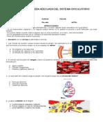 Sistema Circulatorio 2019