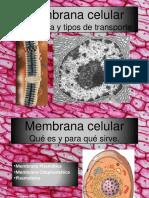 Transportación de nutrientes en la membrana celular