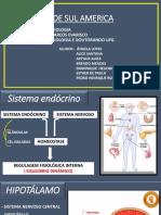 Sistema endócrino.pptx