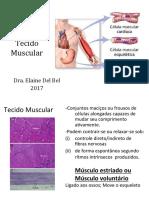 2017MúsculoContracao Muscular