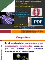 Clase Genetica.pdf