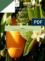 deficiencia en citricos