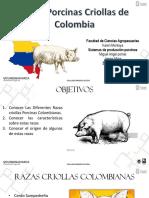Razas porcinas Colombianas