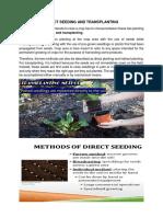 Direct Seeding and Transplanting