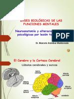 Bases neurofisiologicas