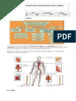 Nuticion Circulacion y Respiracion