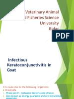 Infectious keratoconjunctivitis.pptx