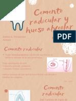 Cemento Radicular y Hueso Alveolar