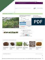 Semillas de pino enano siberiano (Pinus pumila) семена кедрового стланика 2018 _ eBay.pdf