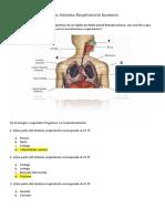 Prueba Sistema Respiratorio 4