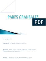 Pares Craneales Pp