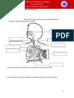 Guia Anatomia 5.pdf