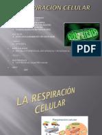 Respiración Celular Diapos 1